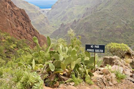 no pase: Paisajes en Barranco de Guayadeque, Gran Canaria