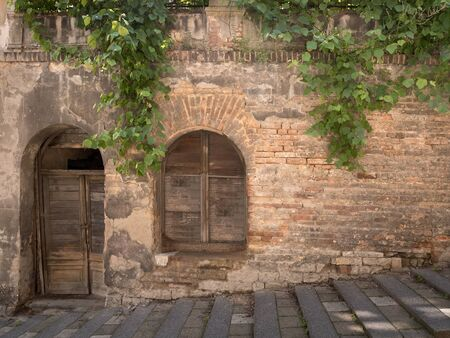 scraped: A Old Mysterious Wall with Grapes Plant