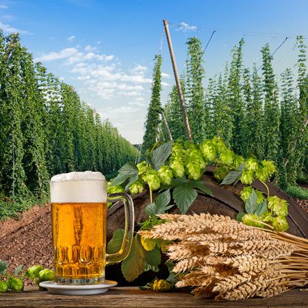 홉과 보리가있는 맥주 유리