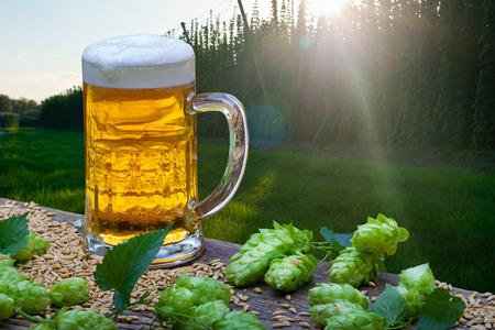Beer Glas with Hop Cones in the Hop Field