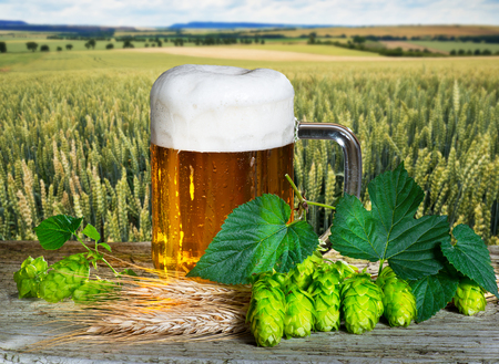 Beer glass and raw material for beer production Stok Fotoğraf