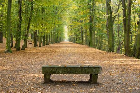 Avenida de hayas sin gente en otoño