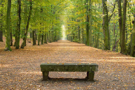 Beech avenue without people in the autumn Standard-Bild