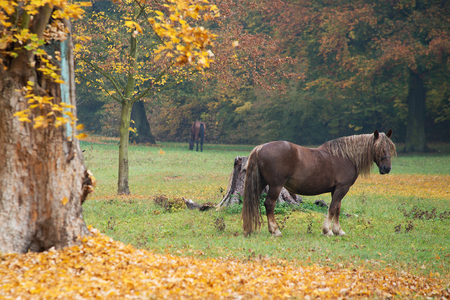 The horse on the meadow in the autumn