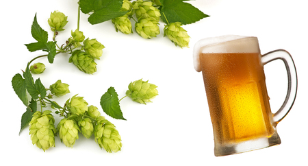 Glass of beer and hop cones isolated