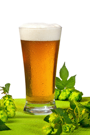 Glass of beer and hops on the white background