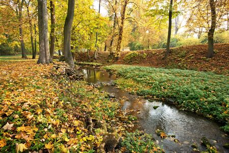 Creek in the park in autumn season