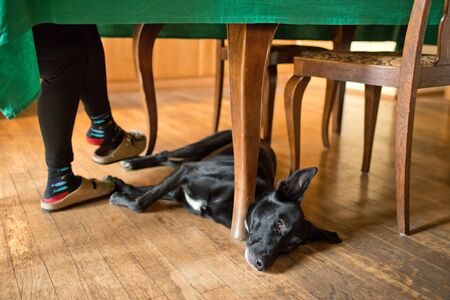 Dog lying on the ground under table.