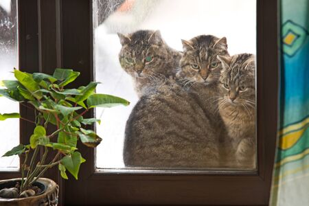 Three cats looking through the window.