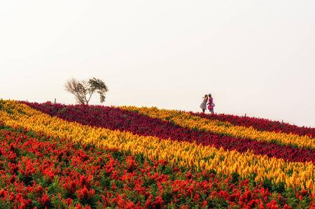 biei: Couples in a field of flower taken in Biei, Japan.