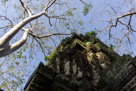 strangler: Ta Prohm temple and ruins in Siem Reap Stock Photo