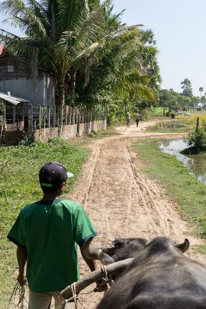 siem reap: Bullock cart tour in Siem Reap Stock Photo