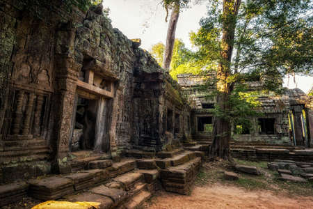 strangler: One of many large trees and temple structures in Ta Prohm temple and ruins in Angkor Wat, Siem Reap