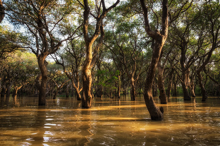 sap: Tonle Sap Mangrove forest scenery near Angkor Wat, Siem Reap. Stock Photo