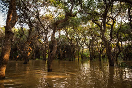 siem reap: Tonle Sap Mangrove forest scenery near Angkor Wat, Siem Reap. Stock Photo