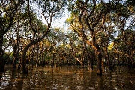 tonle sap: Tonle Sap Mangrove forest scenery near Angkor Wat, Siem Reap. Stock Photo
