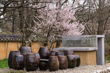 rooftile: Traditional garden with korean clay jars with a cherry blossom behind. Taken in Gangneung, South Korea.