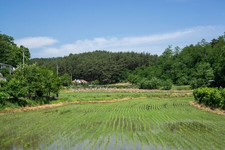 paddies: small rice paddies surrounded by the mountains and hills in gangneung, gangwondo, south korea. Stock Photo