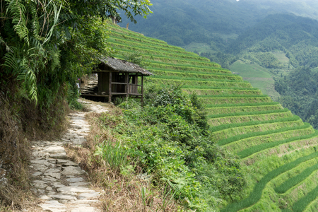 rice terrace: A small shack along the trail. The longji rice terrace viewed from the viewpoint number 2 thousand layers to the heaven. Longsheng, China