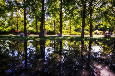 green: small reflections of metasequoia trees over at seoul forest park in ttukseom south korea