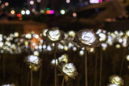 travel features: Deongdaemun design plaza led roses taken in seoul, south korea