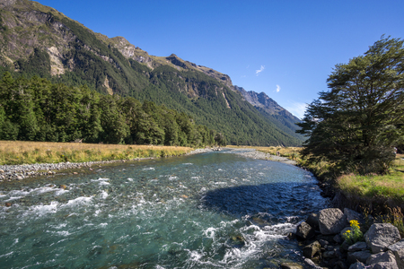 anau: mackay creek located on the way to milford sound summer view with the creek running through the mountains.