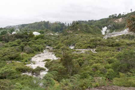 geysers: te puia geothermal valley landscape view with live geysers and mudpools. In Rotorua, New Zealand.