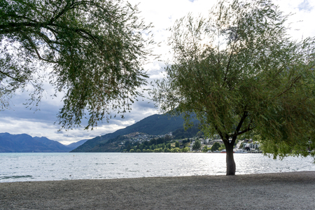 lakeside: lake wakatipu view of willow tree from queenstown lakeside beach area. Queenstown is a small town in new zealand. Taken during summer Stock Photo