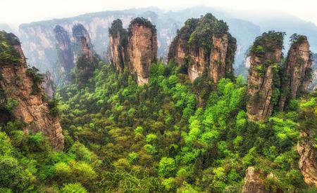 yuanjiajie scenic area in zhangjiajie landscape views. Tall obelisk like rocks with deep valleys.
