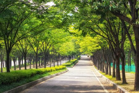 incheon grand park tree lined bike road. taken during summer.