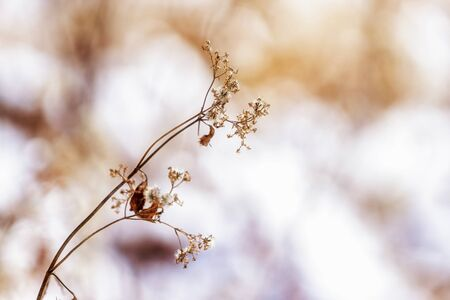 wild shrubs in the winter covered in snow. Stock Photo