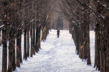 woman jogging through metasequoia road covered in snow taken in haneel park, seoul, south korea Stock Photo