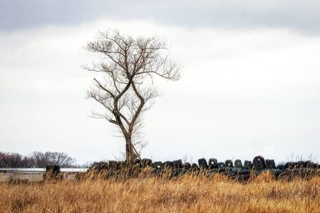 a lone tree in jeju stone park. tall grassland area with a tall tree taken during winter. Jeju Island, South Korea Stock Photo - 71295277