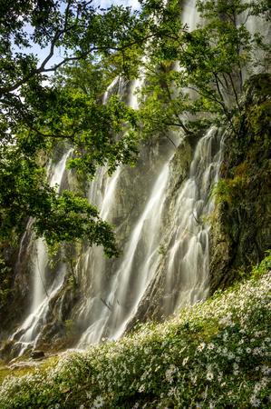 mountin: Waterfall over the Chrysanthemum field. Taken in Jeongeup during Chrysanthemum festival.