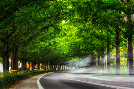 meta: A car passing through the metasequoia road. Damyang Metasequoia Road in South Korea. Taken in summer.