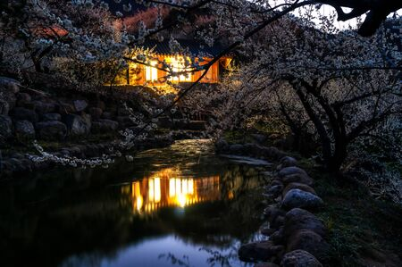 Traditional Korean house among the plum flowers in Plum Flower village reflecting off a little lake. Stock Photo