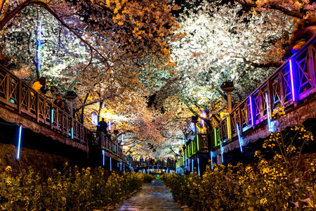 Jinhae Yeojwacheon stream during the cherry blossom festival at night. The stream illuminated by the neon lighting along the stream. Stock Photo