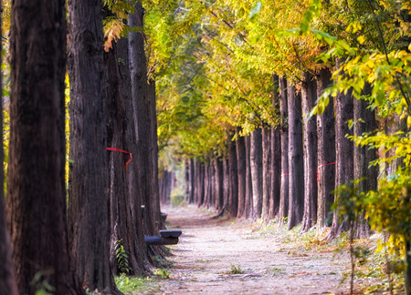 metasequoia road with a small picnic bench in haneul park. Located in mapo district in seoul, south korea