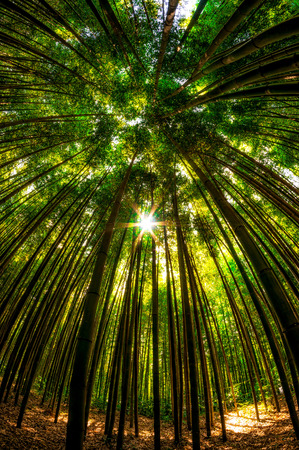 Bamboo forest in Damyang, South Korea taken during summer. Stock Photo