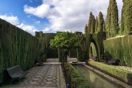 Generalife garden orage tree with park benches. Alhambra palace in Granada, Spain