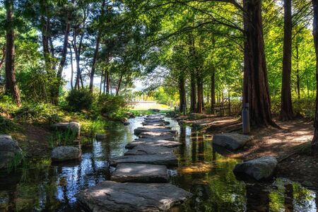 metasequoia trees line up the small stream with stone steps in semiwon garden.