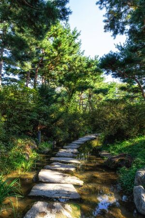 pine trees line up the small stream with stone steps in semiwon garden.