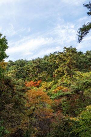 autumn foliage in yongmunsan mountain taken near the entrance to the mountain park. Reklamní fotografie