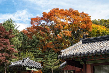 Autumn fall foliage leaves resting on top of Jongmyo shrine in Seoul, South Korea