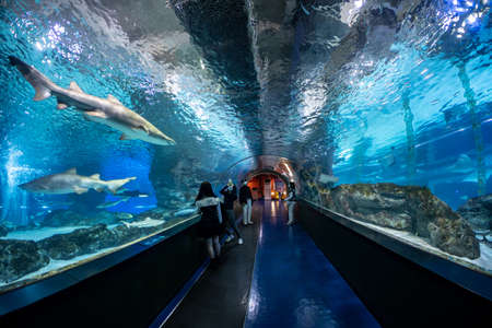 coex mall aquarium undersea tunnel with sharks swimming nearby. Editorial