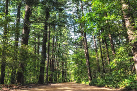 Woljeongsa fir tree forest trails. Famous trail in Pyeongchang, South Korea.