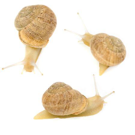 snails on white background photo