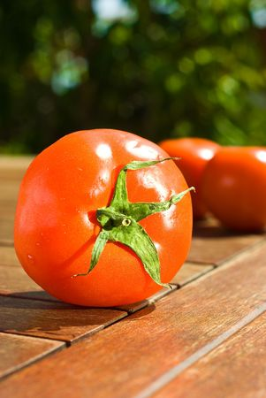 tomatoes on sunny day photo