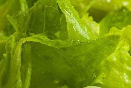 fresh lettuce closeup photo