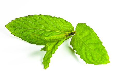 leaf of mint isolated photo